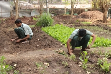 farming-3
